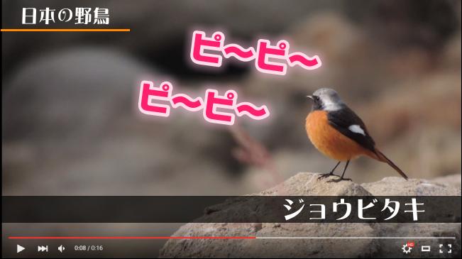 テロップ 動画 imovieの字幕(テロップ)の入れ方、フォントや色の変更方法を徹底解説!